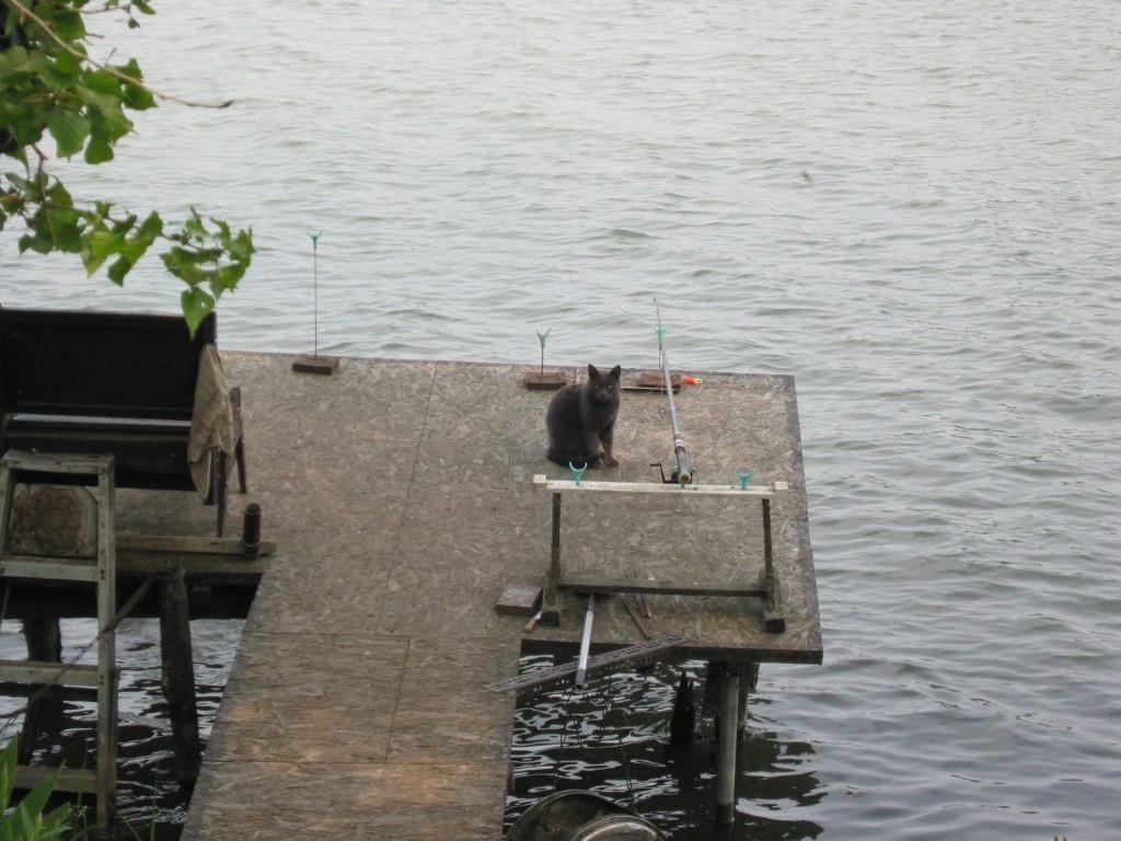 The waterfront deck of my Mom's cottage – Anyámék nyaralójához tartozó vízparti stég