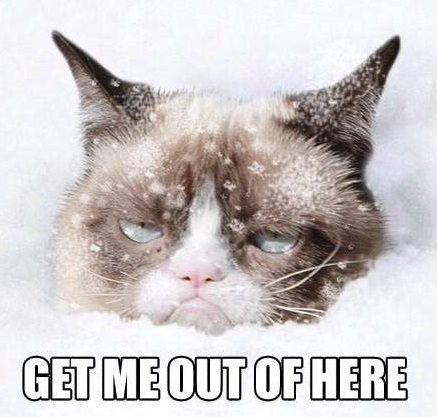 451835-grumpy-cat-snow-no